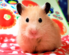 videos xxx hamster free porr