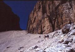 Scan10255 (lucky37it) Tags: e alpi dolomiti cervino