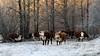 Ågestas Naturreservat 牧场 (frank y) Tags: winter forest sweden stockholm 冬 franky naturreservat 瑞典 ågesta 斯德哥尔摩 ågestas vivitarseries1200mmf30 自然保护地