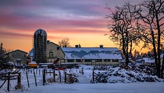 Colour me country (Christie : Colour & Light Collection) Tags: sunset sky farm barn pastels pastelcolours pastelcountry bc country colours soft yellow pink pastel tress silo farmequipment love fence valentinesky