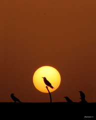 the.one (Shairani) Tags: sunset sun birds silhouette canon d balcony powershot neo crow karachi morpheus thematrix theone 12xzoom maghrib explored s3is canonpowershots3is