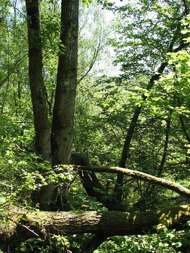 Woods around slate quarry,