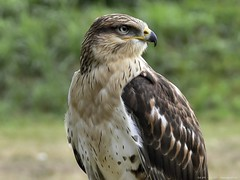 1000282 (Nemodus photos) Tags: nature eagle wmp ineffable supershot specanimal avianexcellence concordians mindigtopponalwaysontop