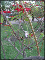 In the forest (SoniaenDublin2009) Tags: pets cute bunny gallo fox kawaii lovely yamato ai alix gallina benalmadena treboles fairland dollzone pukipuki pukisugar bjdoll dollzonebunny lapalomapark dollzonefox flowersparquedelapaloma arroyodelamielparquedelapaloma pukisparquedelapaloma chickepukipuki treespukipuki