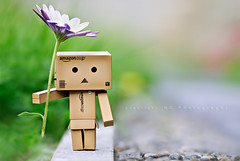 ... (Kiwi_GaL) Tags: flower nikon dof sigma daisy shallow tgif 105mm danbo d80 revoltech danboard bringontheweekendplease