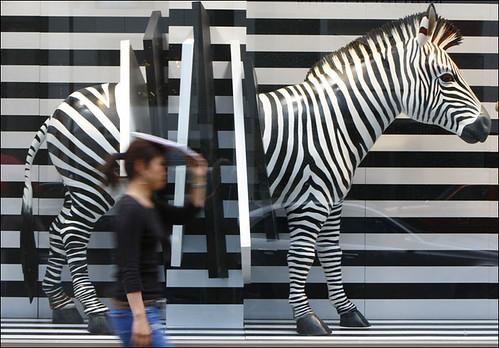 Shattered Zebra