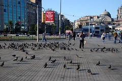 Pigeons and People (Let Ideas Compete) Tags: plaza city travel shadow birds turkey square cityscape shadows many pigeon pigeons istanbul mosque dome taksim touristcity muslimcountry secularcountry