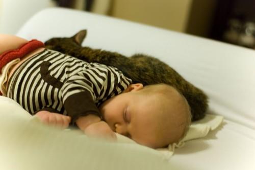 nap partners