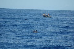 DSC_0192 (mjmermis) Tags: hawaii dolphins kauai napalicoast