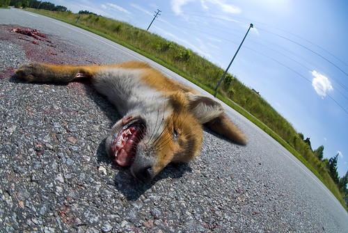 Dead Fox by JT-Pixel