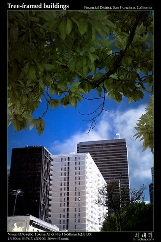 Tree-framed buildings