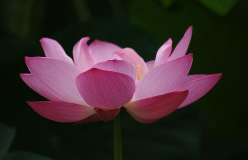 泥に咲く花