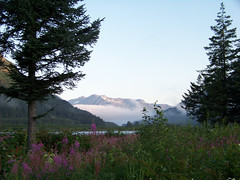 Kenai Fjords (Bear Creek, Alaska, United States) Photo