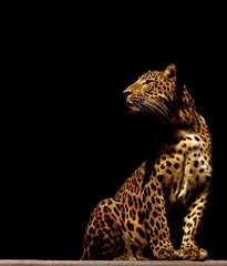 (ssj_george) Tags: life lighting leica light wild orange black paris france nature animal yellow cat pose mammal lumix zoo big shadows leo wildlife panasonic spots leopard spotted 1001nights panther menagerie  platinumheartaward georgestavrinos fz28   ssjgeorge