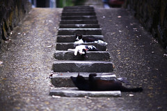 10 (yugoroyd) Tags: cats cute cat canon eos kitten stair dof step 5d      tashirojima streycat tasirojima