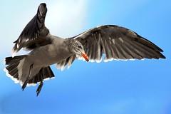 Malibu Bird