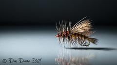 #12 Stimulator (TroutBum51) Tags: fly nikon flyfishing stimulator d300 fishingfly tamron90mmf28 strobist stimulatorfly