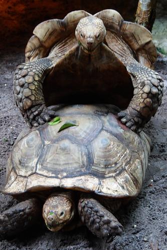 turtle on turtle