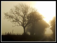 Misty Somerset morning.... (Levels Nature) Tags: uk autumn england sun mist tree nature silhouette sunrise bravo mood peaceful somerset wincanton