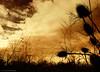 "Leave a trail (Claudio.Ar) Tags: light sunset naturaleza sun color luz sol nature clouds landscape atardecer searchthebest path sony paisaje trail nubes fields sensational topf150 dsc campos pampa tlc h9 bellisima gpc thecitadel blueribbonwinner cruzadas bej group"" passionphotography gigashot worldbest superaplus aplusphoto flickraward newacademy platinumheartaward fleursetnature goldsealofquality theperfectphotographer sirhenryandco multimegashot magicdonkeysbest photoexel claudioar claudiomufarrege panoramafotográfico lesamisdupetitprince goldenart naturescreations phvalue dragondaggeraward artofimages saariysqualitypictures thecelebrationoflife imagesforthelittelprince musicsbest worldsartgallery absolutelyperrrfect bestcapturesaoi travelsofhomerodyssey oracosm oracope ""arkies oracobb committeeofartists coppercloudsilvernsun"