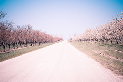 ... (Olivia Joy StClaire) Tags: road pink blue flower tree fruit cherry spring michigan farm joy orchard cherryblossom leelanau aky ojoyous1