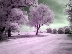 infrared field (MasterGeorge) Tags: county tree field lumix university maryland baltimore panasonic infrared 18 fz hoya umbc r72 fz18