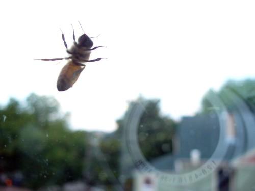 bumbley bee