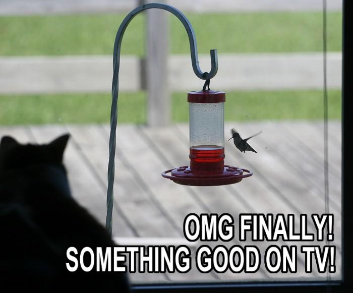 07-17-cathummingbird