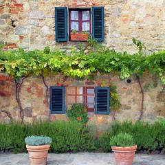 Italian Windows #15, Monteriggioni (h_roach) Tags: old windows italy vines tuscany shutters monteriggioni grape brillianteyejewel