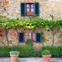 Italian Windows #15, Monteriggioni (h_roach) Tags: old windows italy vines tuscany shutters monteriggioni grape brillianteyejewel