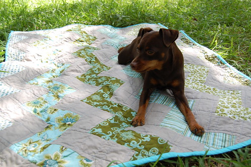 Moose on the Zigzag Quilt