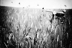 (Effe.Effe) Tags: summer bw field birds bike bicycle rural corn mood wheat grain july bn uccelli campo nostalgic grainy bicyclette marche vlo senigallia grano bicicletta grana bl bwdreams