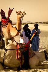 MAL267 (vicentemendez.com) Tags: africa sahara festival desert au camel desierto mali camello tuareg dromedario