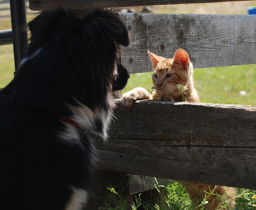 cute orange kitten dog love cat pic