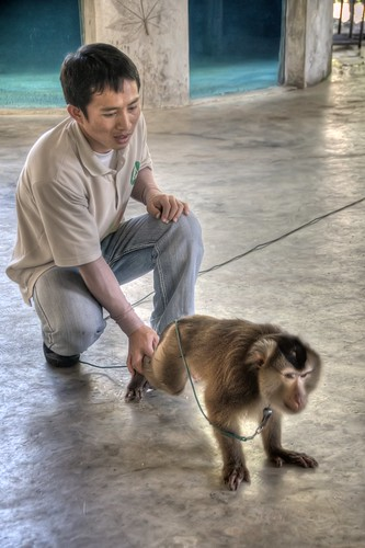 Monkey Doing Push-ups