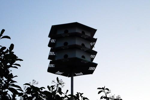 Birdie Condo - 08-11-09
