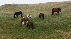 Chevaux sauvages / Wild horses
