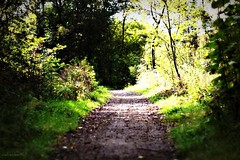 (andrewlee1967) Tags: wood uk trees england forest track britain path gb ef50mmf18 andrewlee mywinners andrewlee1967 canon50d