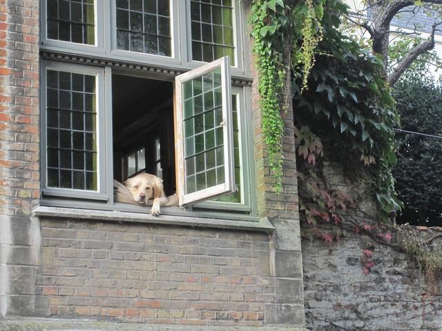 Lounging dog in Bruges