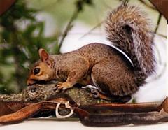 ATC-In The Trees (n2photos2009) Tags: atc charm fiber trade jewel