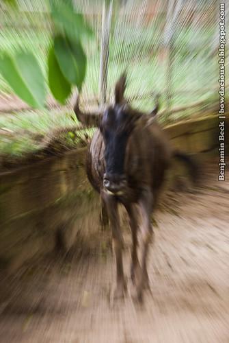 Melaka Zoo Challenge 2009