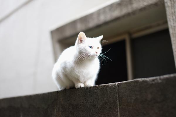 Odd eye Cat 3