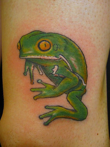 waxy monkey frog #17