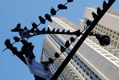 GWNY062 (jankor) Tags: nyc newyorkcity ny newyork facade manhattan balcony pigeons guesswherenyc midtown nycguessed gothamist eastside newyorkny suttonplace donthonk usaunitedstatesofamerica stujoguessed guesswhereinnewyork