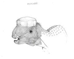 001 (lshoemaker47274) Tags: mammoth mastodon diplodocus cryptozoology cryptid megatherium protoceratops moeritherium concavenator mycocephale microcephale