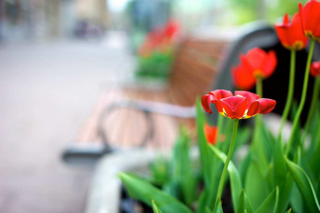 Tulip Bench Monday