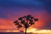 Plant goes to Sleep (David Alexander Elder) Tags: sunset scotland superaplus aplusphoto