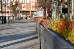 Floral Rainbow (Eliette S) Tags: floral rainbow arcenciel fleur flore couleur color stockholm suède sweden nikon d610