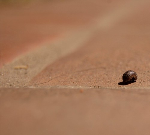 pillbug_journey