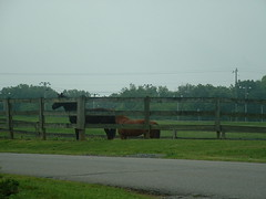 Hey That Horse Just Pooped (riffsyphon1024) Tags: party kentucky fortcampbell fletchersfork